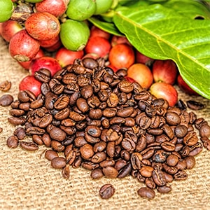 Coffee Beans & Fruit